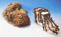 Ötziho boty byly značně poškozeny. Pravou měl mrtvý na noze, levá se našla v ledovci o rok později