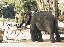 Slon Ét vytváří jedno ze svých uměleckých děl