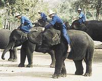 Mladý začínající mahut dostane na starost slůně