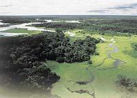 Haenke prozkoumal řadu jihoamerických toků, včetně toho největšího - Amazonky (na fotografii jeden z jejích přítoků, Rio Negro)