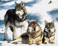 Vlci žijí příkladným rodinným životem, ale spatřit je takto v přírodě se nepodaří každému