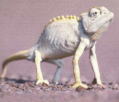 Madagaskarsti Draci Abicko Cz