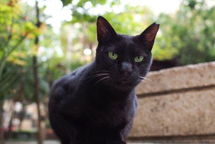malá černá kočička v prdeli