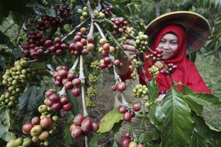 """Češi ročně spotřebují 34 tisíc tun kávy, milují instantní. Jací jsme """"kafaři""""?"""