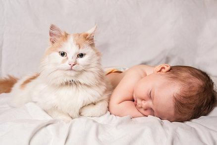 První setkání kočky s novorozencem: To musíte vidět!