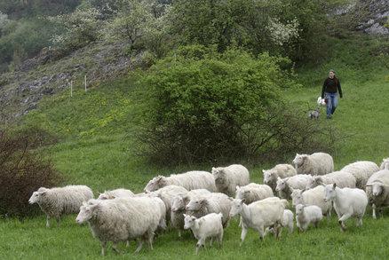 asiatka praha přírodní kozy