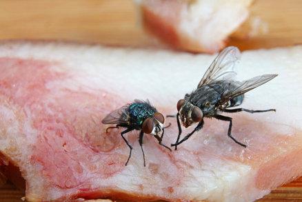 Otravy jídlem budou častější. Infikované mouchy se přemnoží teplem, varují vědci