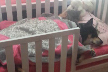 """Matka jde zkontrolovat spící dítě. V postýlce najde """"vetřelce"""", kterého tam nečekala"""