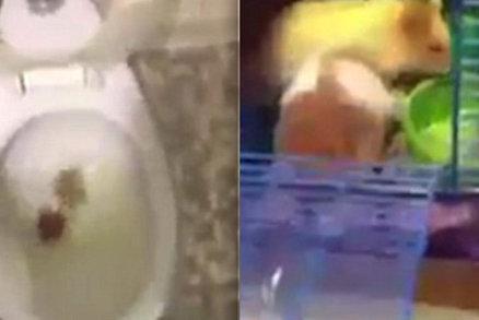 Zdarma videa hampster