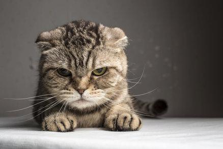 velké phat kočička rty