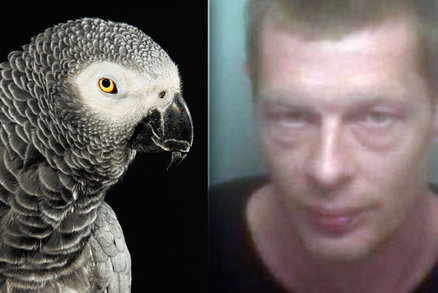 8f9523aff6a https   www.blesk.cz clanek zpravy-krimi 487106 papousek-napadl-a ...
