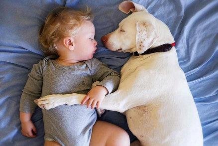 Dojemné snímky týraného psa! Bojí se všech, kromě tohoto miminka