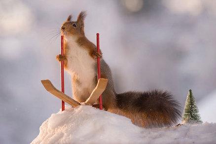 Roztomilé veverky skáčou na lyžích, střílejí z luku a pijí kafe!