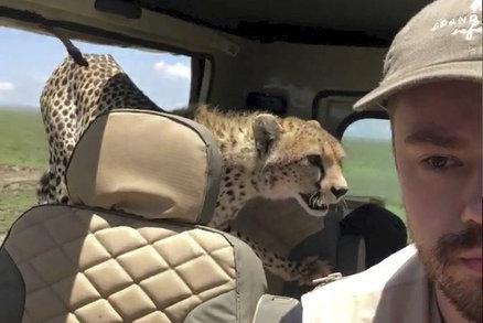 """""""Nejděsivější moment v životě."""" Gepard turistům na safari skočil do jeepu"""