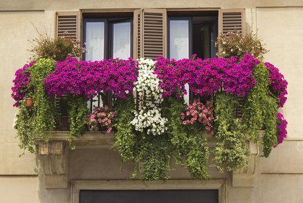 Jaro v bytě: Jak správně přesadit pokojové a balkonové rostliny