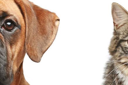 Kočka není pes. Aneb jak krmit domácí mazlíčky?