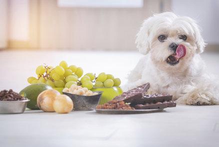 Běžné potraviny, které mohou vašeho psa i zabít! Víte, co nesmí?