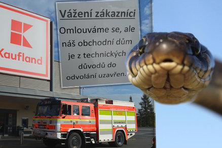 Hon na hada z Kauflandu v Orlové pokračuje: Nikdo neví, kde je a všichni se ho bojí
