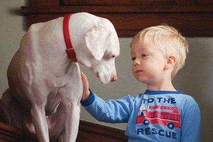 Dojemné snímky týraného psa! Bojí se všech kromě tohoto chlapečka