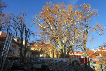 Má strom duši? A jak vypadá? Na to se ptá umělecká soutěž pražských lesů