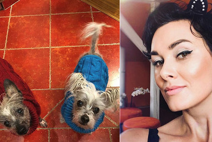 Smutek Miss Salačové: Vidím, jak naši psi odcházejí. Bolí to