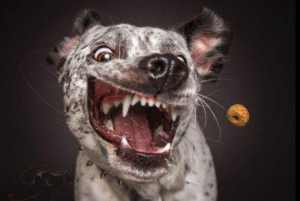 Tahle fotogalerie vám ukáže, jak moc psi milují jídlo!
