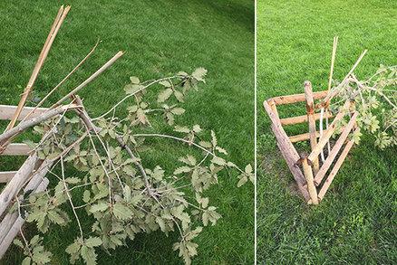 Neskutečný vandalismus: Někdo zlomil vzácný dub v parku u Národního muzea, strom za 70 tisíc to nepřežije