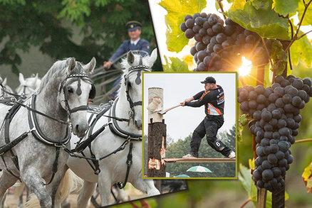 Tipy na víkend: Víno teče na vinobraních proudem, navštivte hřebčín nebo Festival dřeva