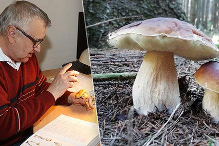 Ochutnali jsme pro vás jedovaté houby. Nehledejte jistotu na internetu, radí expert