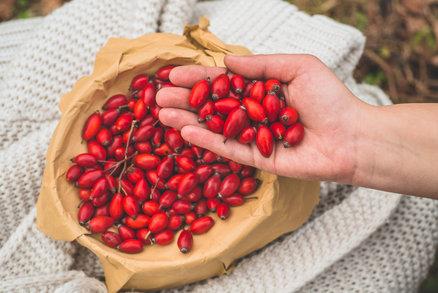 Dozrávají šípky plné vitaminů. Vyrobte si výborný čaj, marmeládu nebo víno