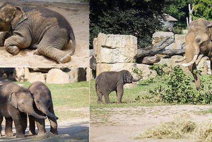 """Do pražské zoo nemohli, tak pomáhali penězi: Lidé podpořili zvířata 15 miliony, nejvíc """"frčel"""" tasmánský čert"""