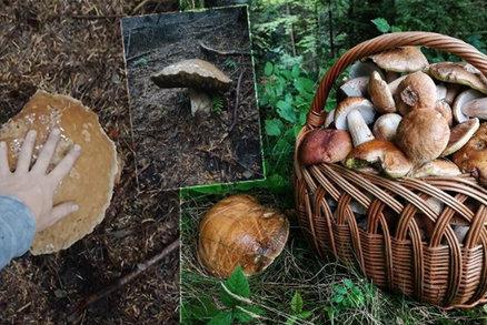 Houbařské žně: Manželé našli v lese monstrum! Hřib vážil 1,5 kila