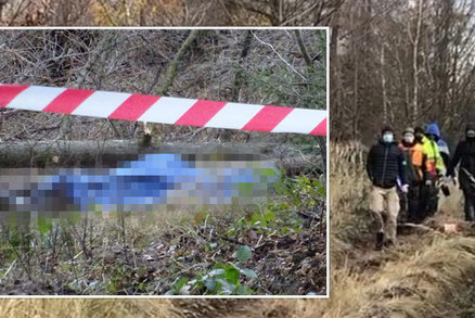 Seniora (†82) u Jílového u Prahy zabil v lese padající strom: Nedaleko káceli dřevorubci