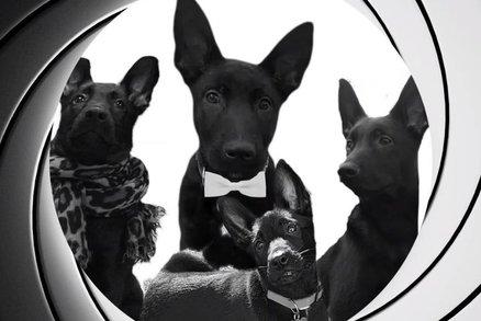 Další bondovka se opozdí, policie natočila náhradu: Štěňata 007 s povolením k roztomilosti