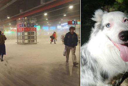 Spoušť na hlavním nádraží a pes hrdina! Lumpy s hasičákem honil čtyřnohý tanečník Lucas