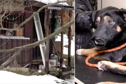 Podivín z chatrče pobodal pejska, kňučící zvíře našla manželka starosty
