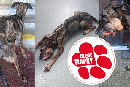 Mikeš hnil zaživa, museli ho uspat: Ochránci zvířat kroutí hlavou nad mírným trestem pro majitele