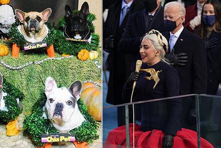Buldočci zpěvačky Lady Gaga jsou zpátky doma. Měl únos vazbu na inauguraci Bidena?