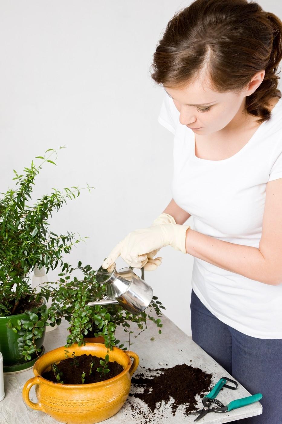 Po přesazení rostliny přiměřeně zalijte.