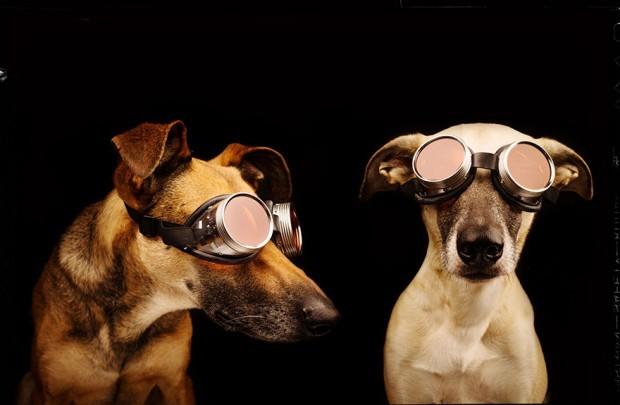 Tyhle psí fotky vám zvednou náladu