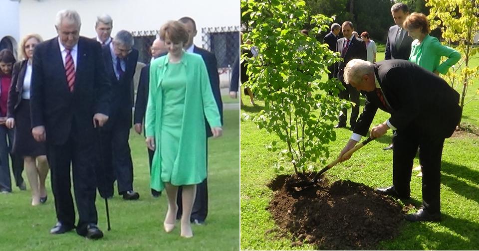 Miloš Zeman v Rumunsku sázel po sobě pojmenovaný strom, podle princezny Markéty mu to šlo velice dobře. Asi zkušenosti z Vysočiny.