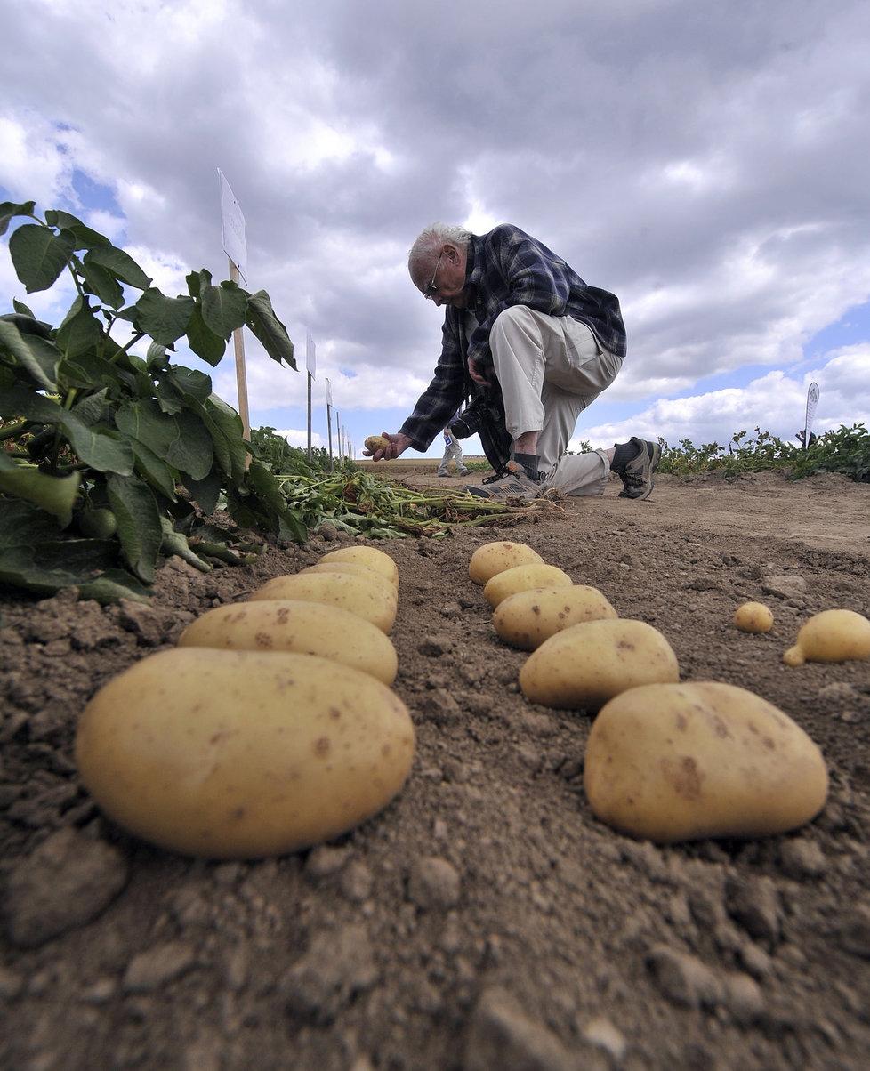 Jak správně skladovat brambory?