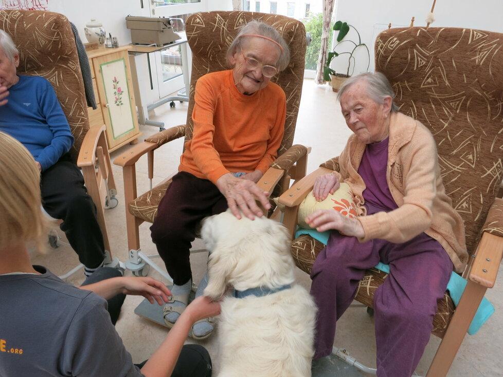 Canisterapie není jen o mazlení a hlazení. Na pořadu je vždy i akčnější část, aportování, příkazy či venčení.