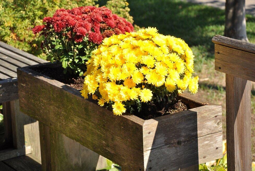 Květiny v truhlících