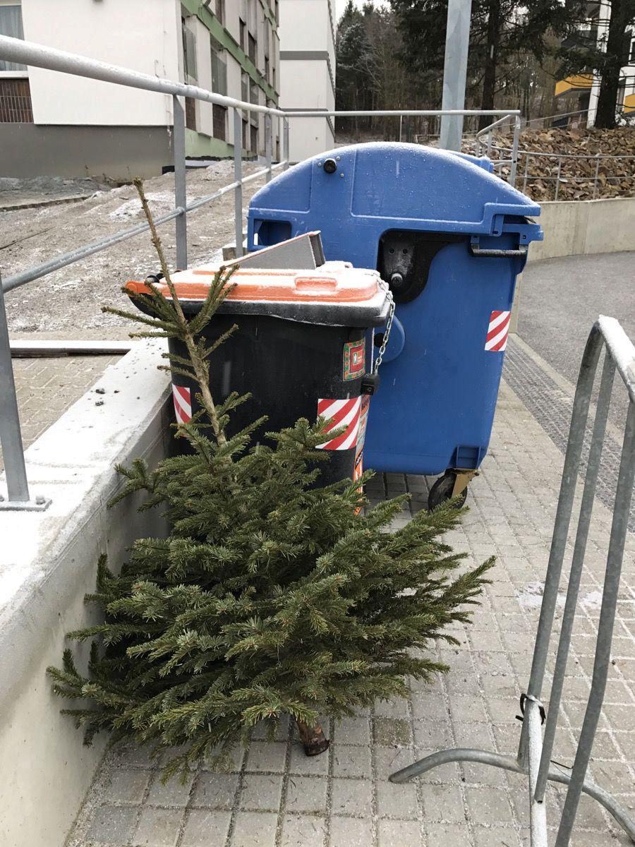 Živé vánoční stromky odkládejte k nádobám na tříděný odpad.