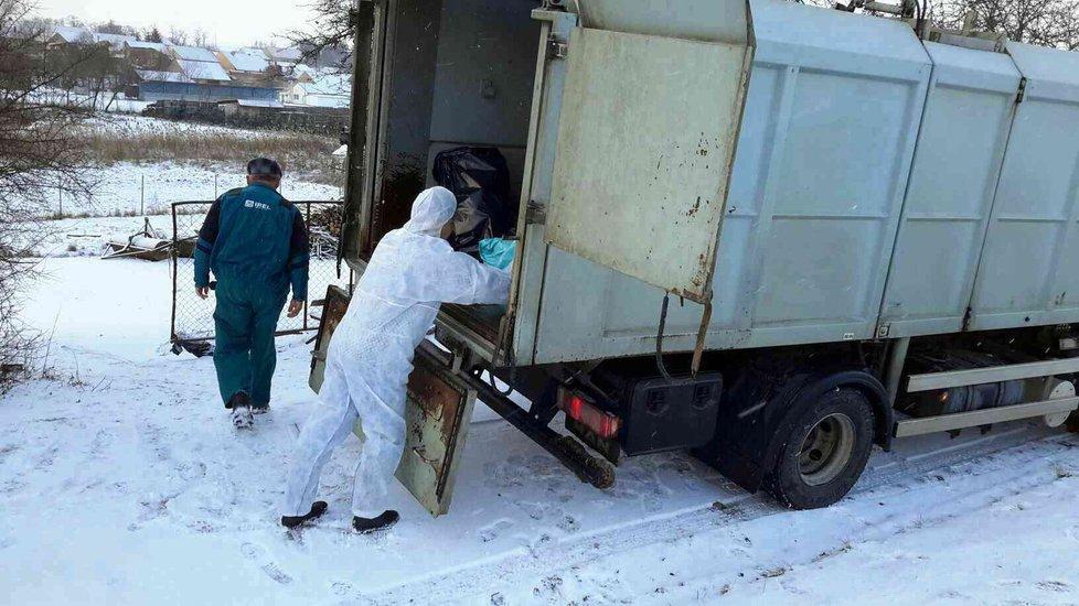 Odvoz usmrcených ptáků do kafilérie v Medlově