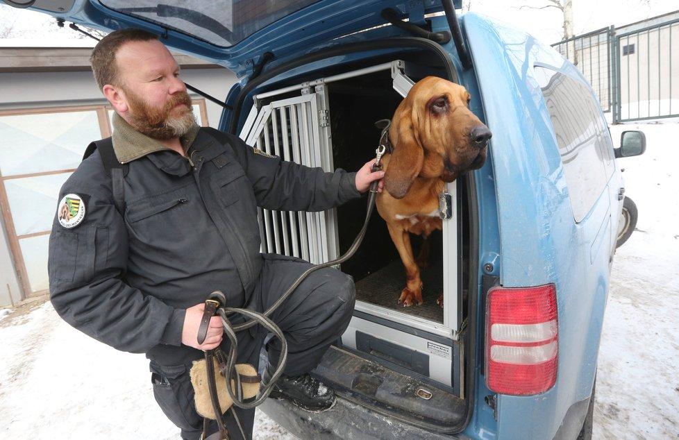 Po Míše (12) v pátek pátrala fena bloodhounda Hippie z Německa.