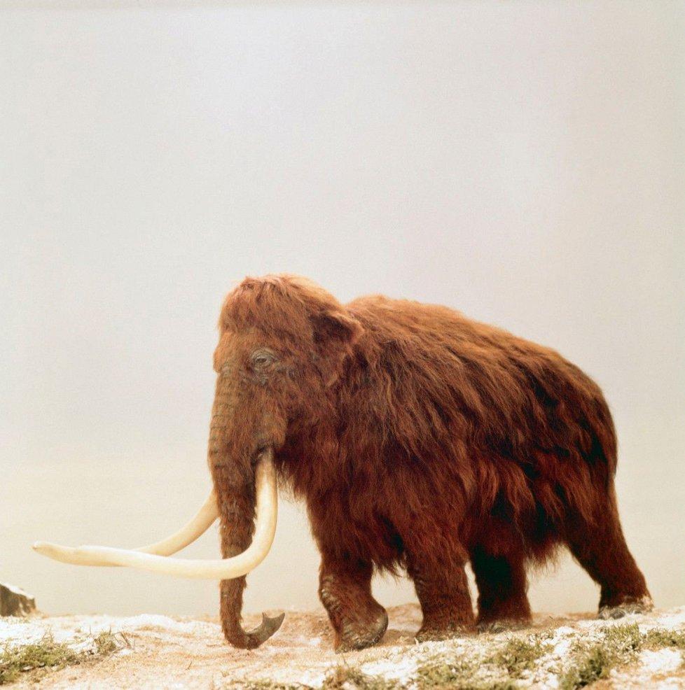 Cílem výzkumu je pokusit se oživit mamuta srstnatého