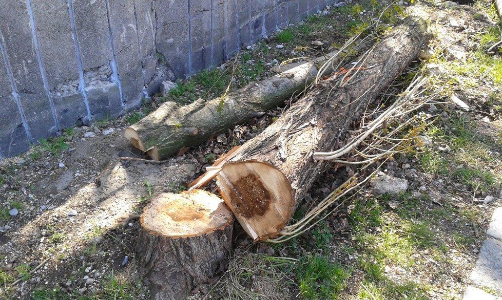 Některé kusy pokácených stromů ještě leží na pozemku u zdi.