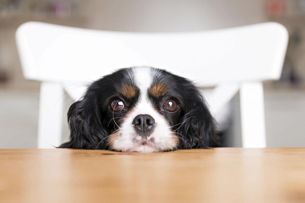 Při krmení psů stále přetrvává řada mýtů.